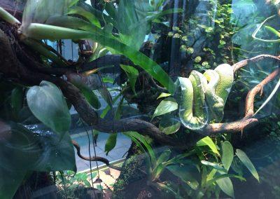 Snake, Gerrald Durrell Zoo